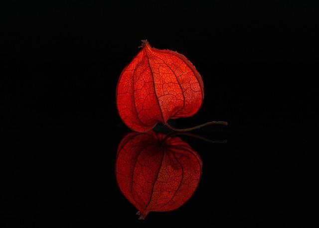 Spiegelfunktion Blume