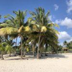Weißer Sandstrand mit Palmen in Playa Larga