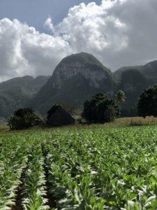 Landschaft im Viñales Tal