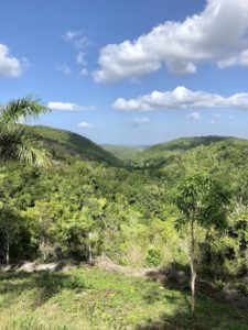 Ausblick: Natur in Las Terazzas