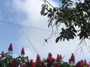 Kolibri im Baum