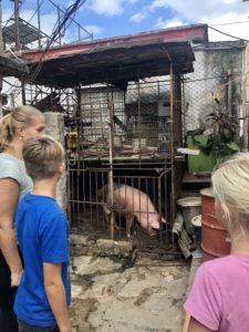 Im Hinterhof einer Familie der Kubahilfe: Schweinekäfig
