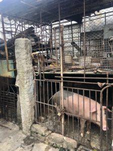 Hinterhof mit Schweine- und Hundezwinger