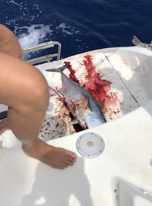 Fisch an Bord