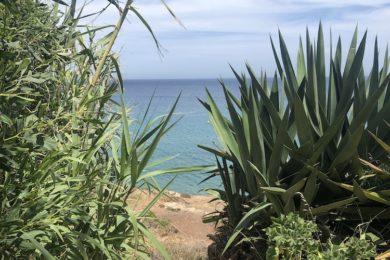 Blick aufs Meer in San José